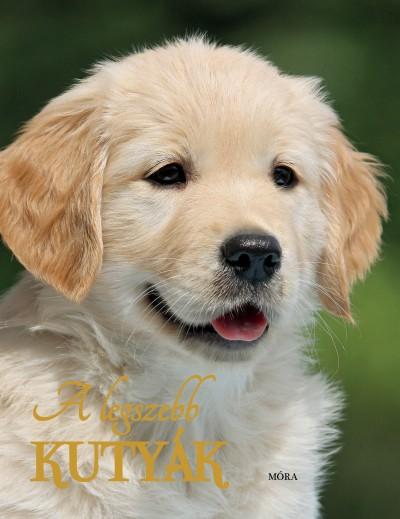 - A legszebb kutyák
